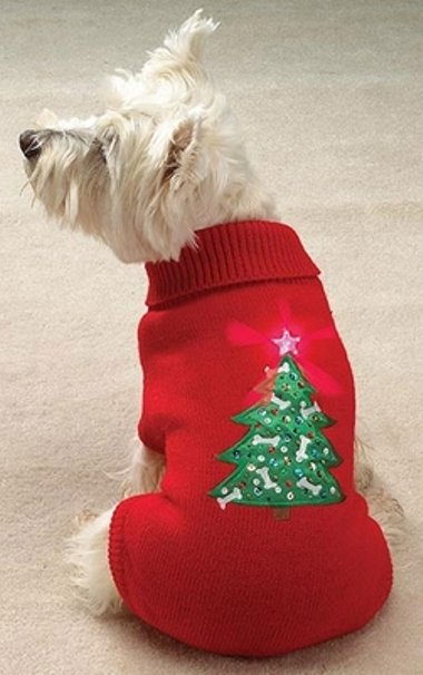 casual-canine-twinkling-star-holiday-sweater-27