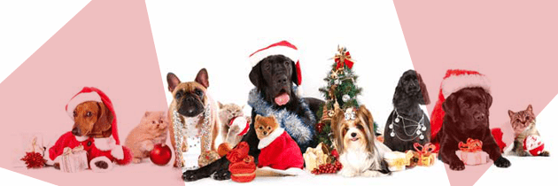 Holiday Pets: Pawsome Outfits & Savory Treats