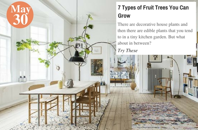 7 Types of Fruit Trees You Can Grow