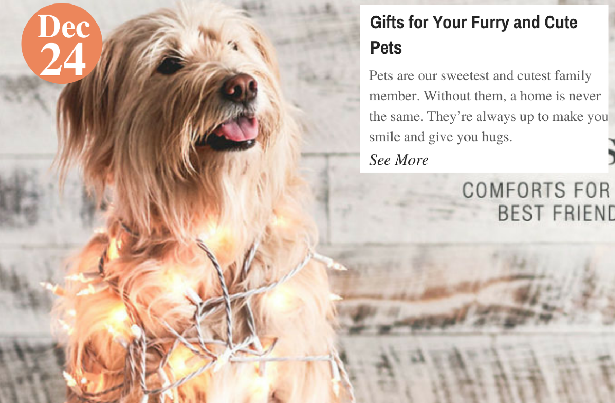 Gifts for Your Furry and Cute Pets