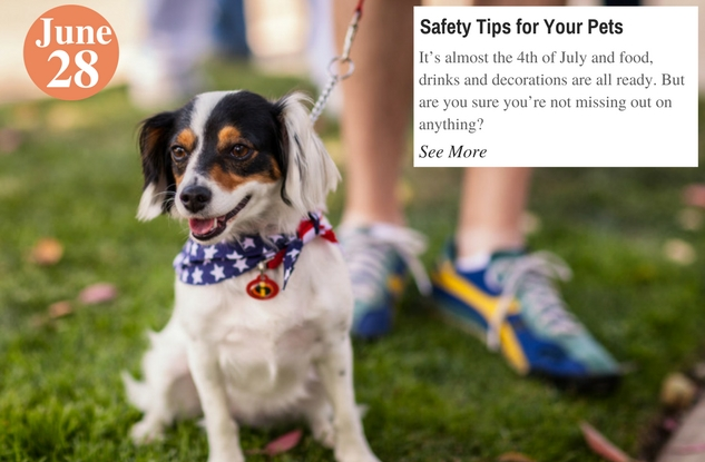 Safety Tips for Your Pets