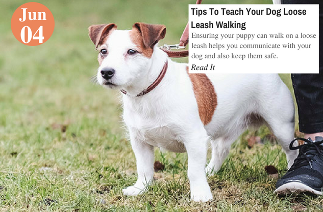 how to teach my dog to walk on a leash