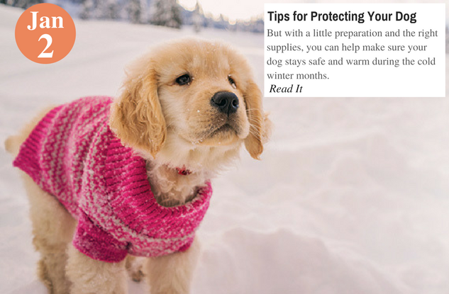 Tips for Protecting Your Dog