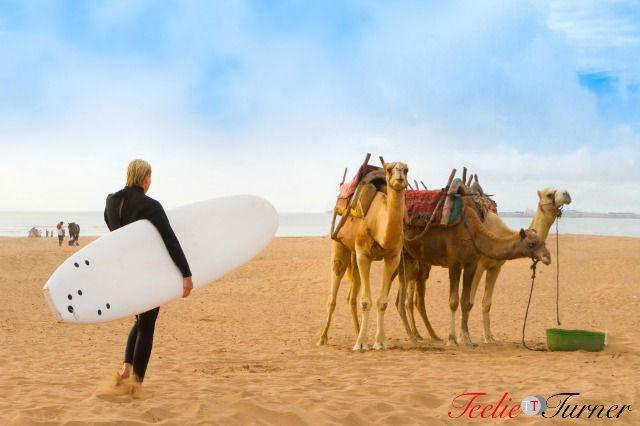 Female surfer and camels at the beach of Essaouira, Morocco, Africa.