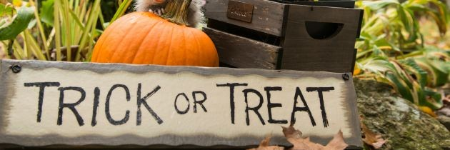 Halloween Decorations 2015: Indoor & Outdoor Décor Items Under $20