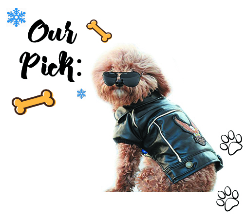 Pet Leather Jacket-pet gift